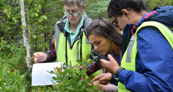 photo of citizen scientists being trained out in the field