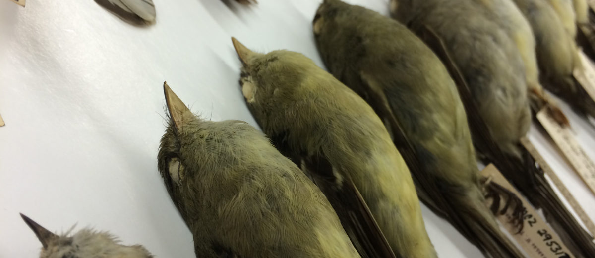 photo of preserved dead birds