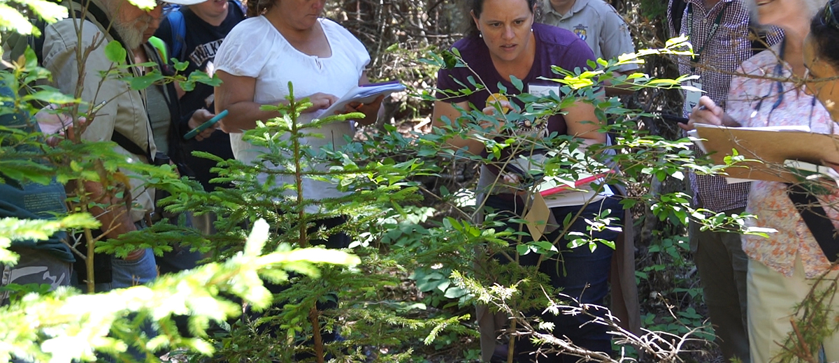 photo of citizen scientists studying a tree