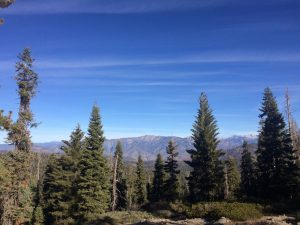 High elevation evergreen trees with SIerra Nevada mountains in background